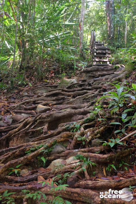 BAKO NATIONAL PARK MALAYSIA