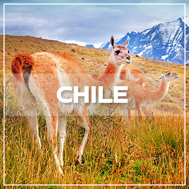 CHILE GALLERY