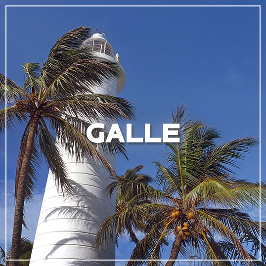 GALLERY GALLE