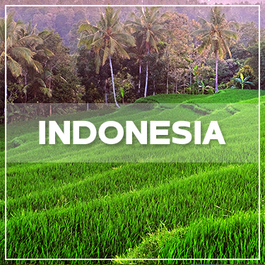 GALLERY INDONESIA